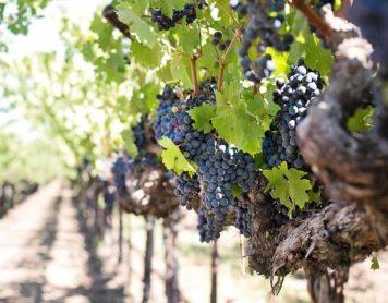 5 Must Visit Los Angeles Wineries
